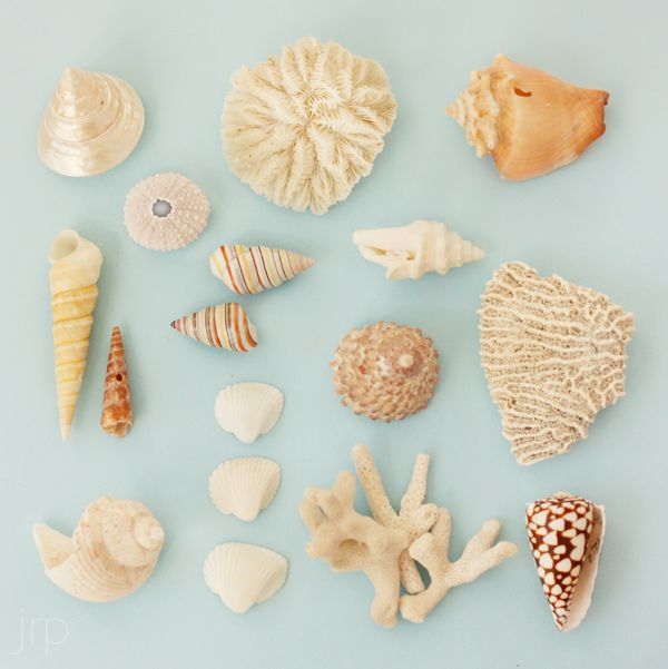 This would make a beautiful shadow box.: Bathroom Design, Shells Collection, Bathroom Interior, Sea Shells, Modern Bathroom, Summer Color, Shadows Boxes, Art Seashell, Ocean View