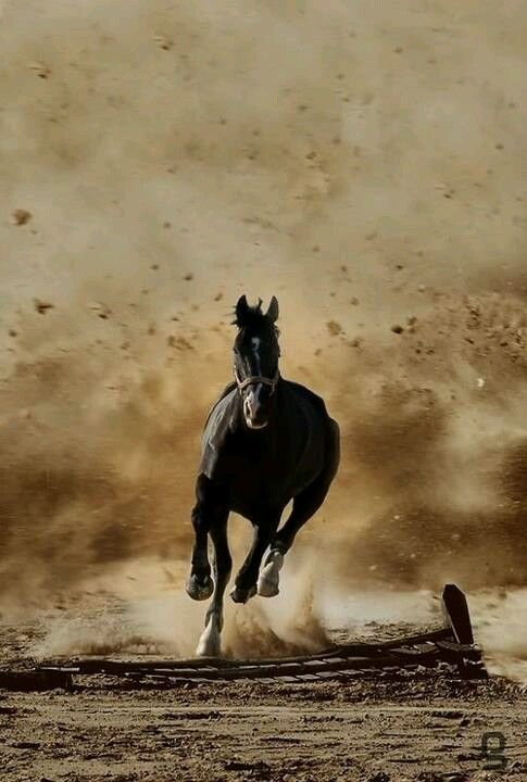 So cool! Horse looks like he is out running a sand storm.