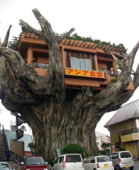 Restaurant in Japan: Okinawa Japan, Trees Houses, Trees Forts, Amazing Trees, Houses Restaurant, Treehouse, Places, Architecture, Houses Design