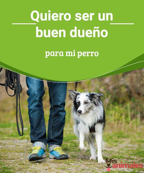 Quiero ser un buen dueño para mi perro  Si quieres ser un buen dueño para tu perro debes darle más de lo que necesita, debes eesforzarte por hacerlo un perro feliz. #dueño #bueno #miperro #consejos