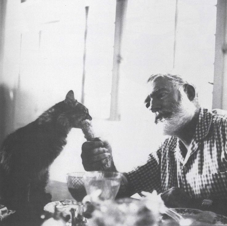 "Ernest Hemingway: ""We have three good cats here so I sang them the song and they were very pleased. When I can't sleep at night I tell them stories about our great cat Mooky out west who fought the badger. When I say THE BADGER! Tester has to get under the covers she is so frightened. Hemingway& Cats: an illustrated biography, 2005. Pictured: Cristobal."