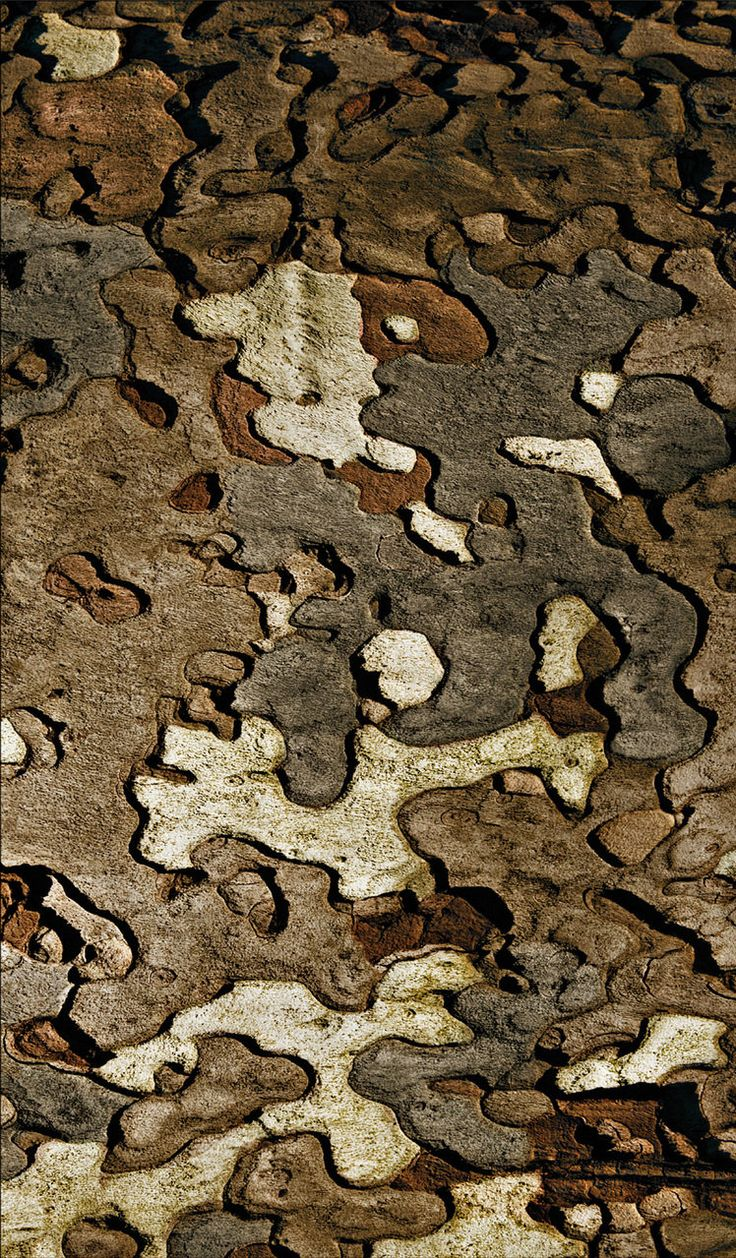 Wonderful tree bark details...resemblance to a camouflage fabric pattern