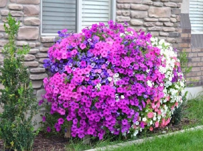 Fantasztikus virágosláda, mindig megcsodáltam az ilyen szépségeket, de már én is el tudom készíteni!