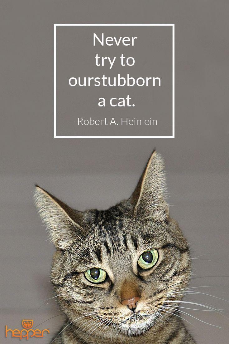 Best Cats Quotes Robert Heinlein