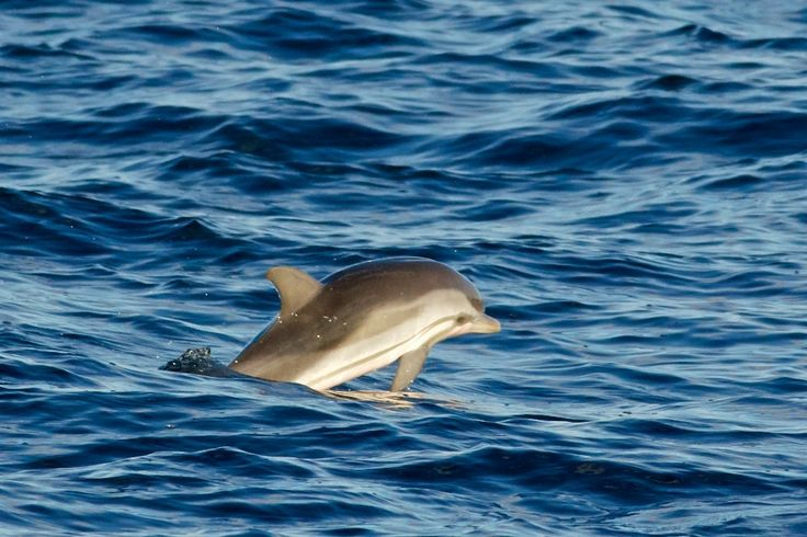 458 best images about Dolphins on Pinterest | Swim ...