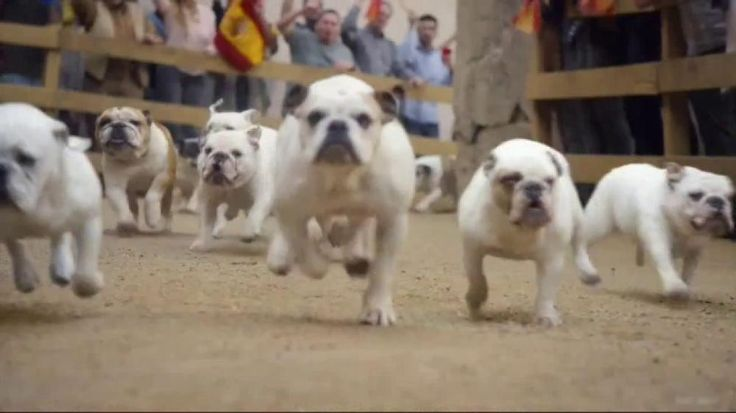 Men in white run for their lives through the streets of Spain. As one of them falls and begs for his life, the menace chasing them comes running around the corner—a herd of slobbering bulldogs. The fallen man braces for impact and gets a good licking. GEICO knows that the running of the bulldogs might be surprising, but how much money Aleia saved on car insurance shouldn't be.