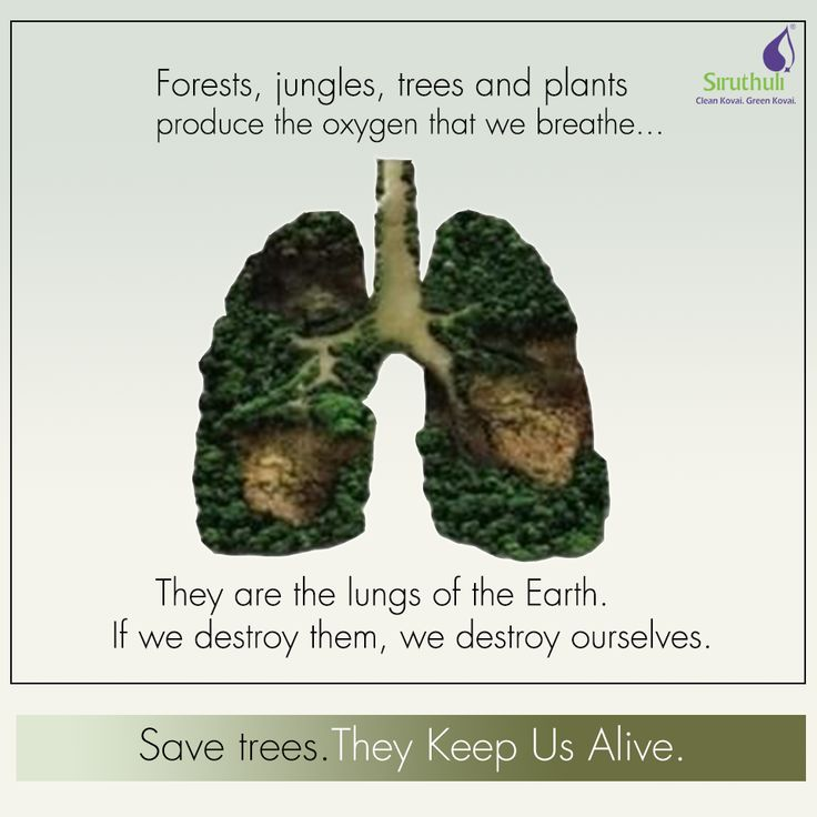 Forests, jungles, trees and plants produce the oxygen that we breathe.  They are the lungs of the Earth.