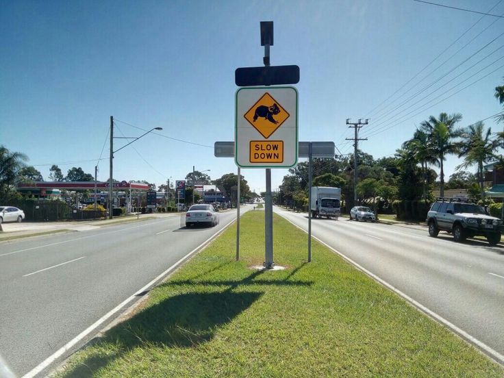 #brisbane #aussiethings #koala #slowdown