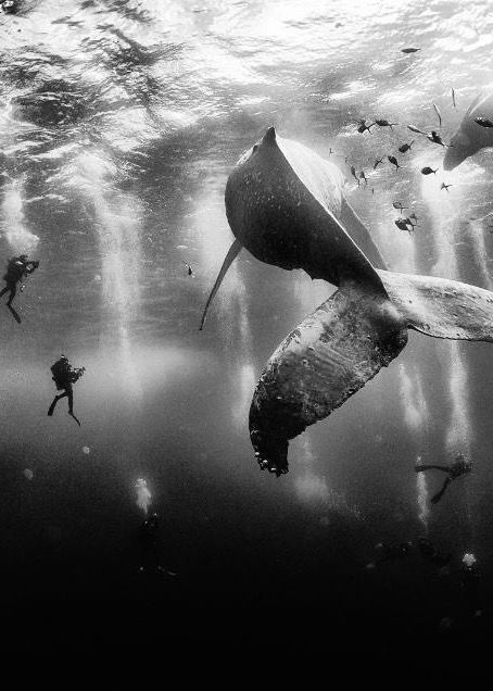 The grand prize winner of the National Geographic Traveler Photo Contest: Anuar Patjane Floriuk captures diving with a humpback whale.