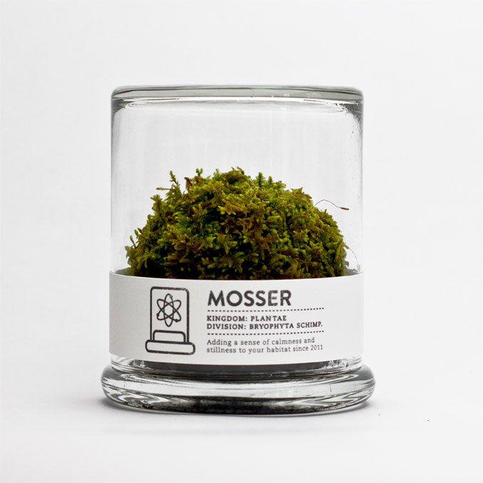 Mosser Moss Terrarium. One for the desk.