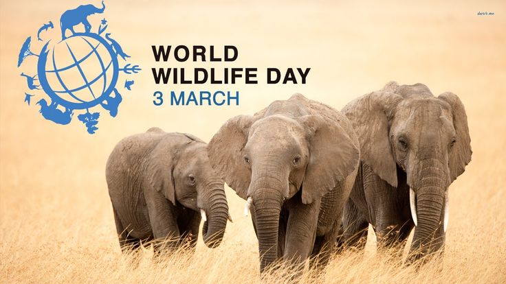 Listen to the young voices  | WORLD WILDLIFE DAY