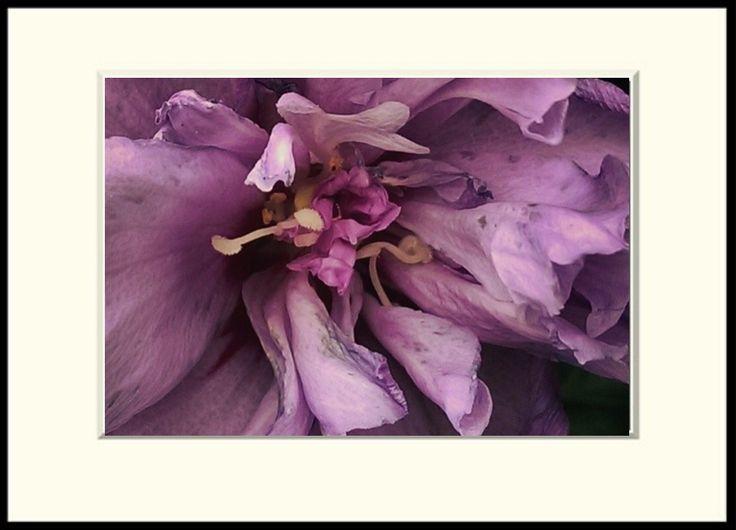 Photoart by Holst, exhibition and sale Fotokunst, udstilling og salg http://www.facebook.com/HolstKunst