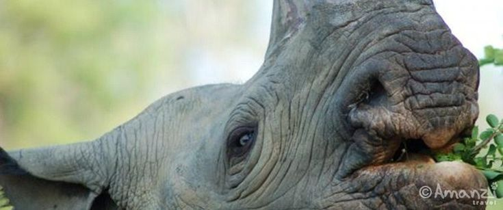 Volunteer with rhino at Rhino & Elephant Sanctuary <3