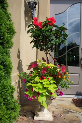 Front Door Planter Ideas