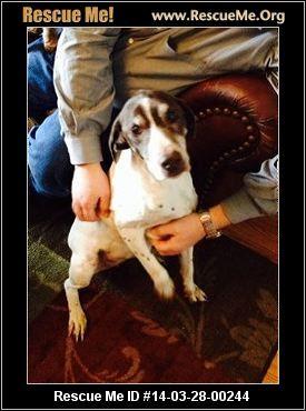 Maggie in Hillsboro!!! ― Oregon German Shorthaired Pointer Rescue ― ADOPTIONS ―RescueMe.Org