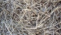 How to Spread Pine Straw as mulch!