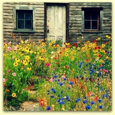 Lovely wildflower garden Garden Design Pinterest