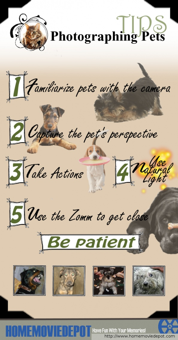 Photographing #Pets Tips Infographic