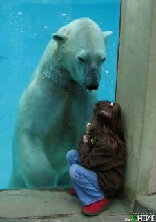 COOOL!!: Little Girls, Polar Bears, Writing Prompts, The Zoos, New Friends, Photo, So Sweet, Animal, Kid