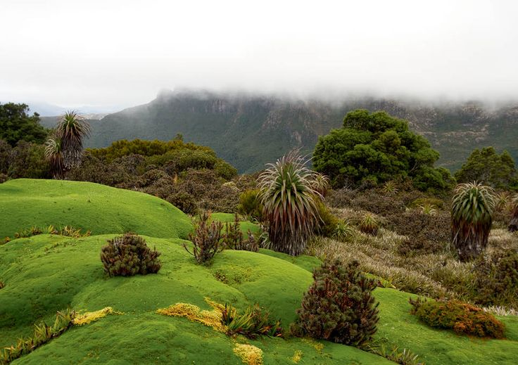 """""""Cushion Plants on Mt Anne"""" is the November image on my large 2014 calendar. This spiral bound calendar is 34cm x 24cm and is available at http://www.mikecalder.com.au/2013-large-tasmanian-calendar/"""