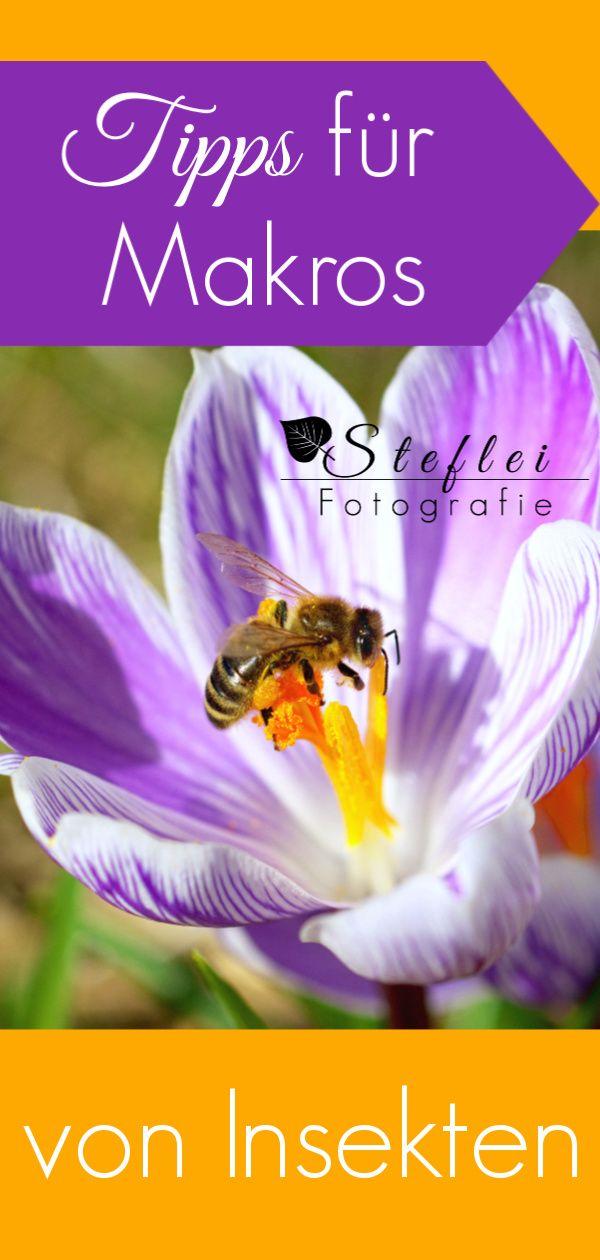 Tipps für Makros von Insekten
