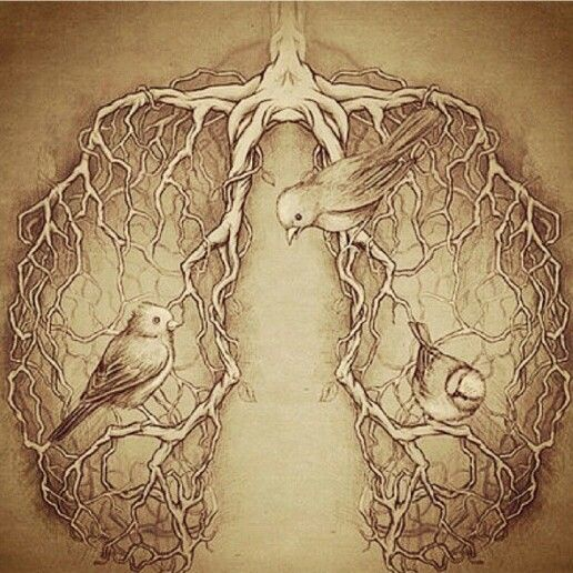 Lungs with birds