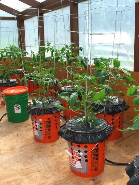 How to Grow Tomatoes in 5 Gallon Buckets: Turn the 5-gallon bucket over and drill 4 to 6 half-inch drainage holes, spaced evenly over the bottom of the bucket. Fill the bucket one-half to three-quarte