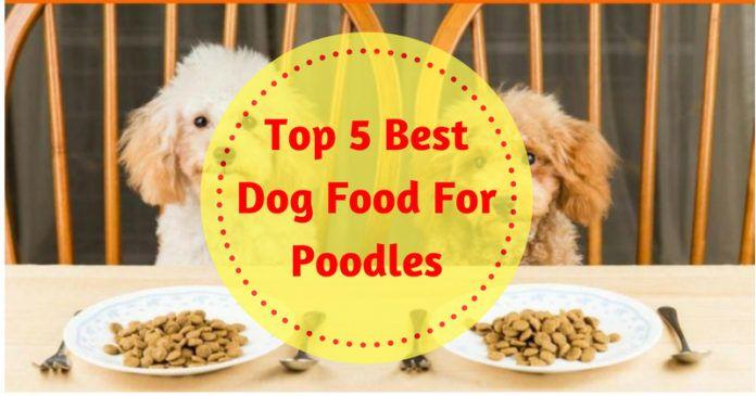 Https Bestdogcaretips Com Best Dog Food For Poodles Dog Food