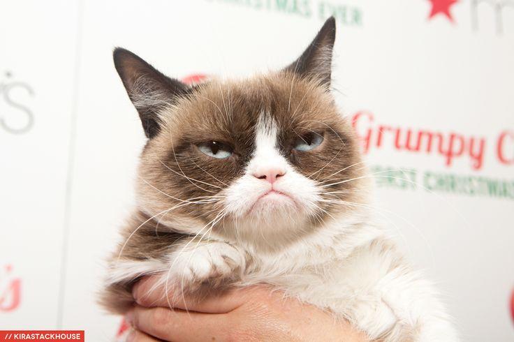 SF SPCA Holiday Windows With Grumpy Cat Grumpy cat, Cats