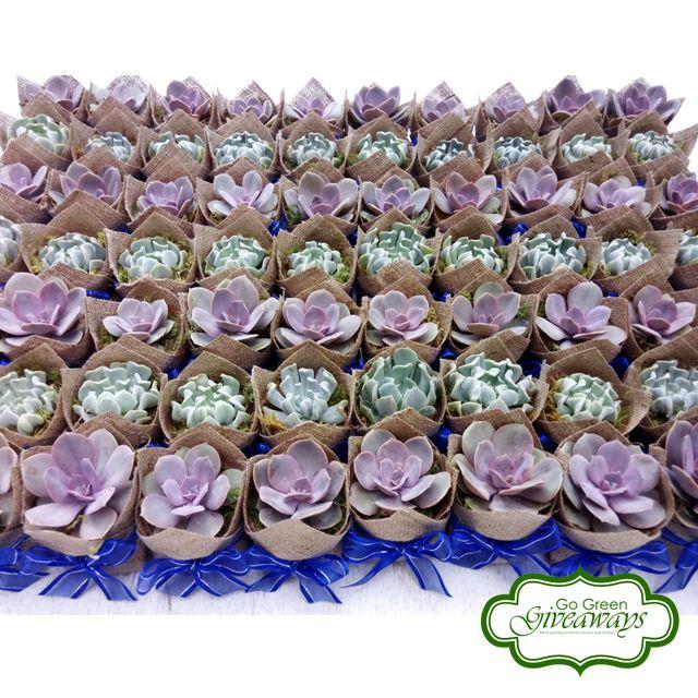 Succulents wedding favors Succulents Philippines PVN Topsy
