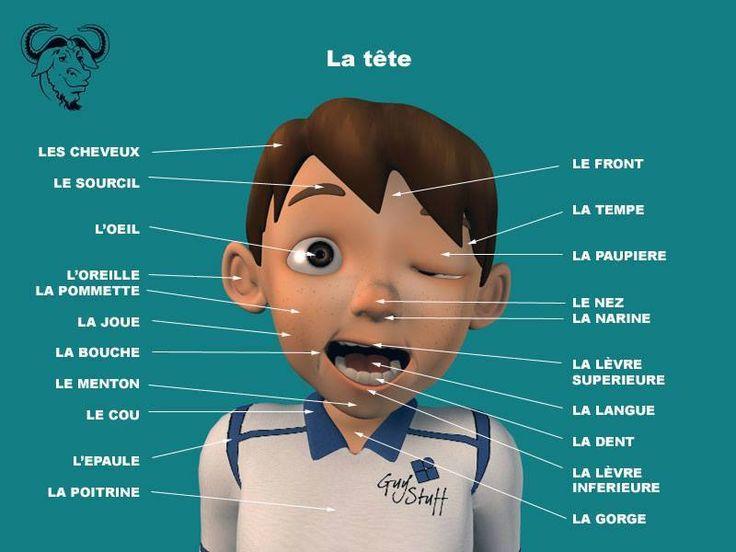 Affiche pour travailles les différentes parties de la tête