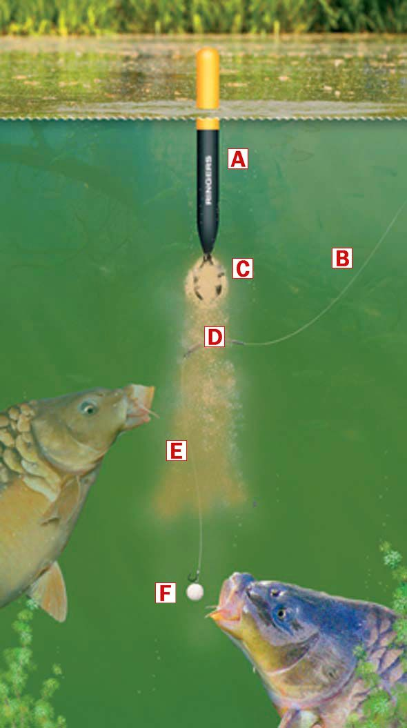 17 best images about carp fishing on pinterest | rigs, sea fishing, Hard Baits