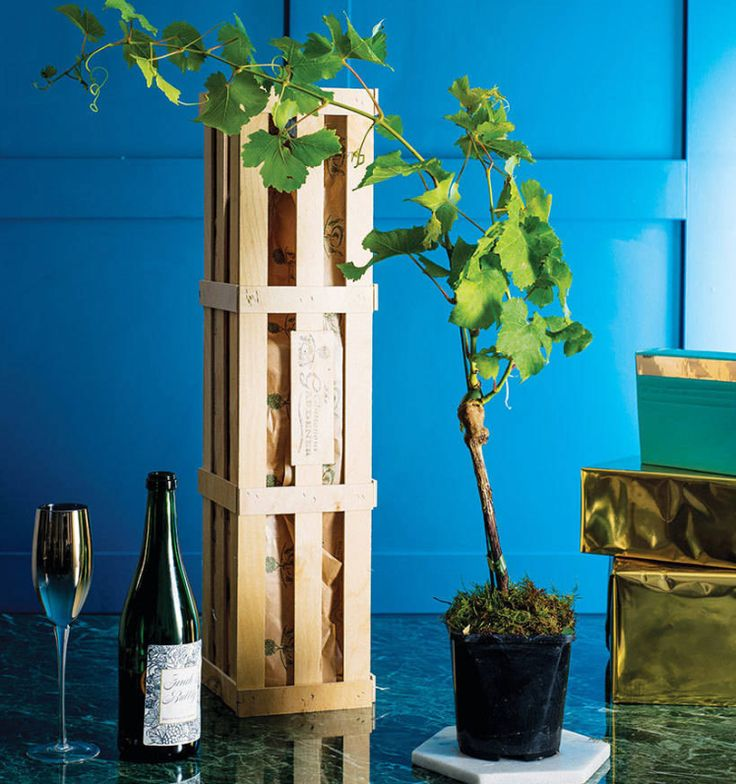 Not only is prosecco good for you, it's now possible to grow your own.  If you're looking to spoil a wine lover this Christmas (in other words, yourself), look no further than the grow your own prosecco gift crate.