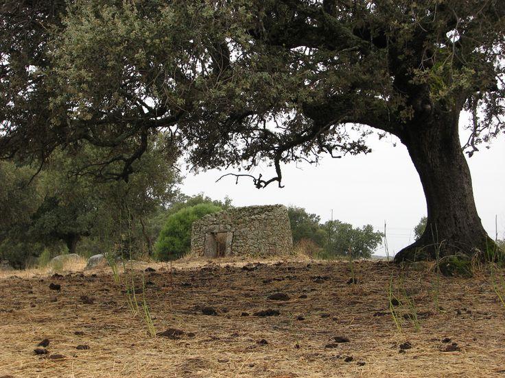 Antiguo chozo que ya no tiene techo en la dehesa del Guijo de Granadilla donde abundan restos de otro tiempo en el que sus habitantes vivían más en contacto con el campo.