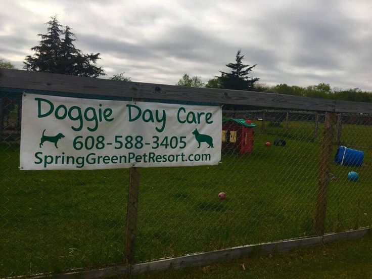 Doggy Daycare Spring Green Pet Resort Pet resort