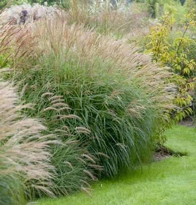 373 best images about yards and gardens on pinterest for Front yard ornamental grasses