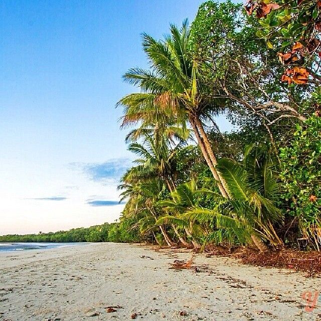 Myall Beach in the heart of the Daintree National Park. Awesome shot from @ytravelblog #thisisqueensland #exploretnq