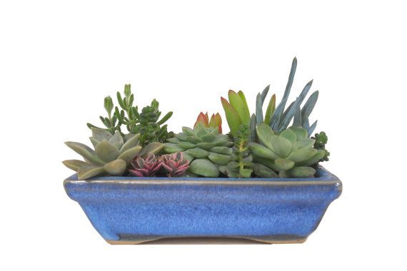 Succulent dish garden in a blue ceramic planter rectangular container - Dish garden containers ...