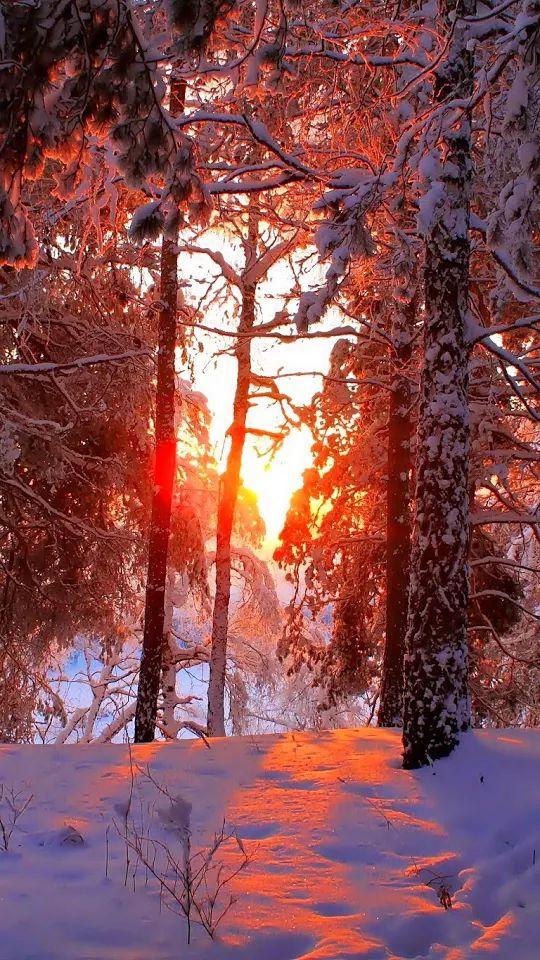 Фото: Зимний закат....