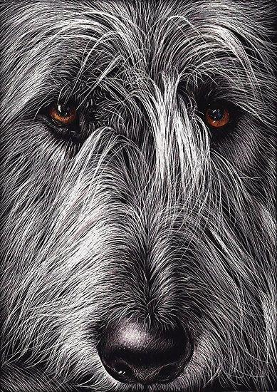 Wolfhound by Elena Kolotusha    Scratchboard/Ink