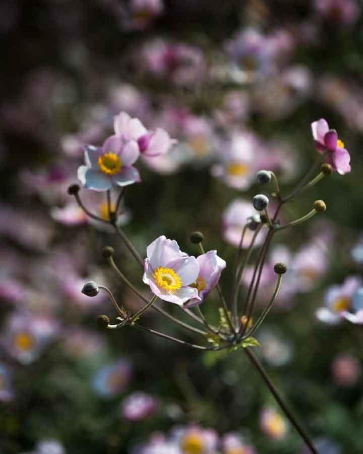 Little flowers. Image©K Woodland/K Woodland Photography.