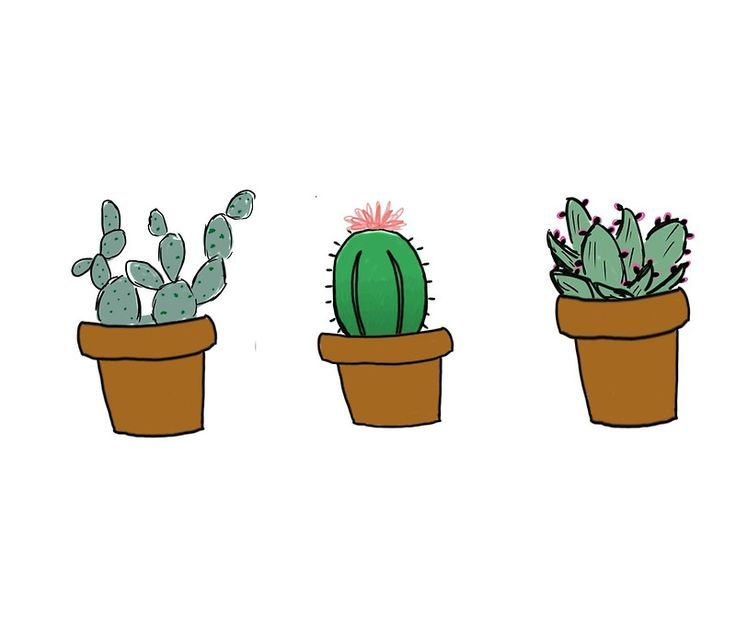 Image result for cactus drawing
