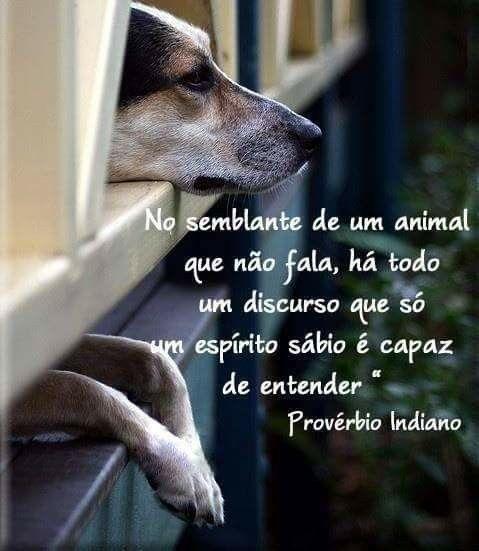 Falam com os olhos...os sensíveis conseguem entender....