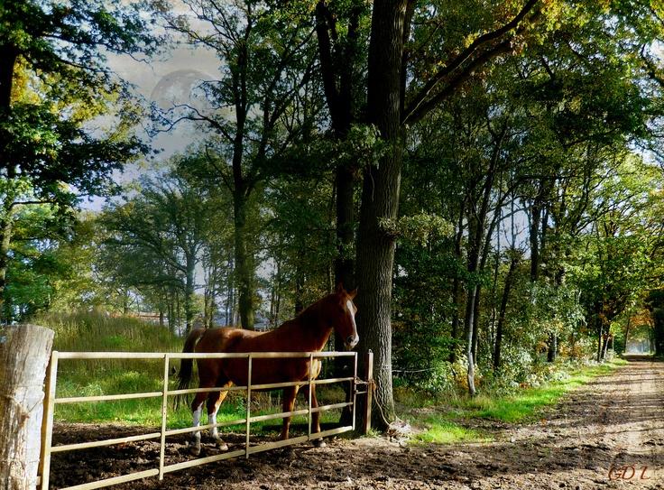 Paard staat aan het hek.