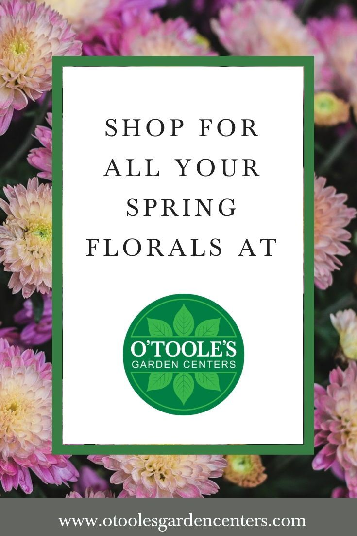 O Toole S Garden Centers Is The Destination For Spring Gardening
