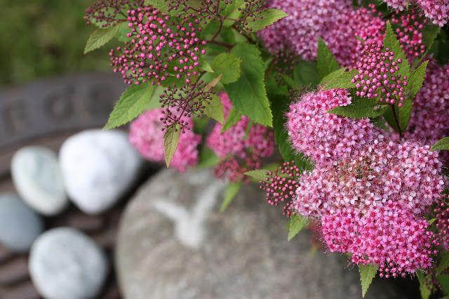 VÅRLI : Form og farge - Blommig Fredag