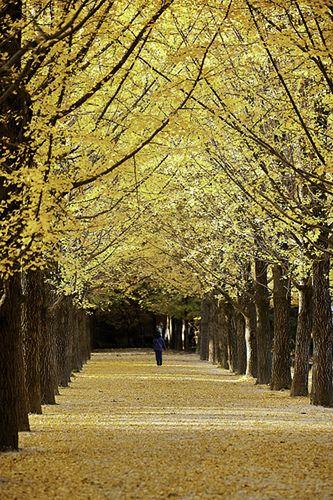 A Golden Walk