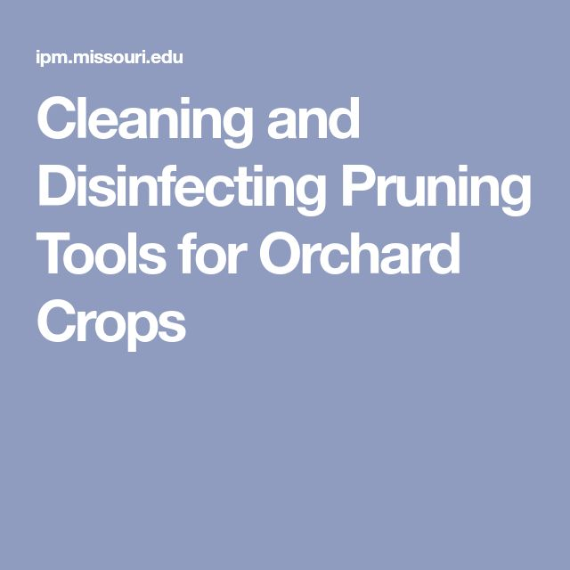Cleaning and Disinfecting Pruning Tools for Orchard Crops