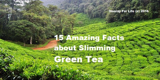 Amazing Facts about Slimming Green Tea