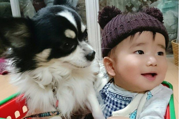 Literally Just A Bunch Of Babies With Dogs To Make You Smile